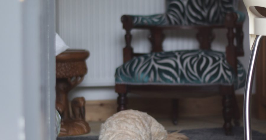 pet friendly self catering accommodation in castleton Speedwell House