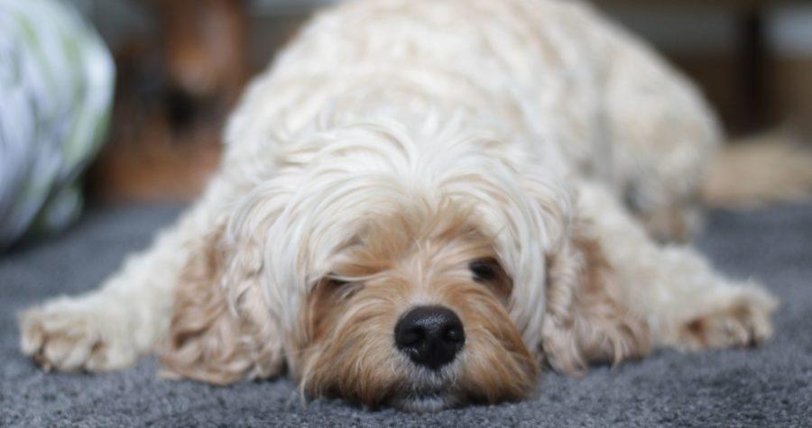 Dexter Speedwell House dog friendly accommodation castleton